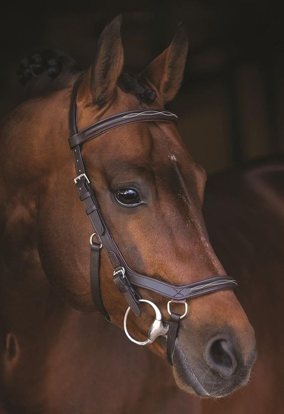 Horseware Rambo Deluxe Competition Bridle