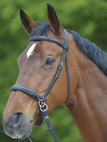 WH Star Bitless Bridle