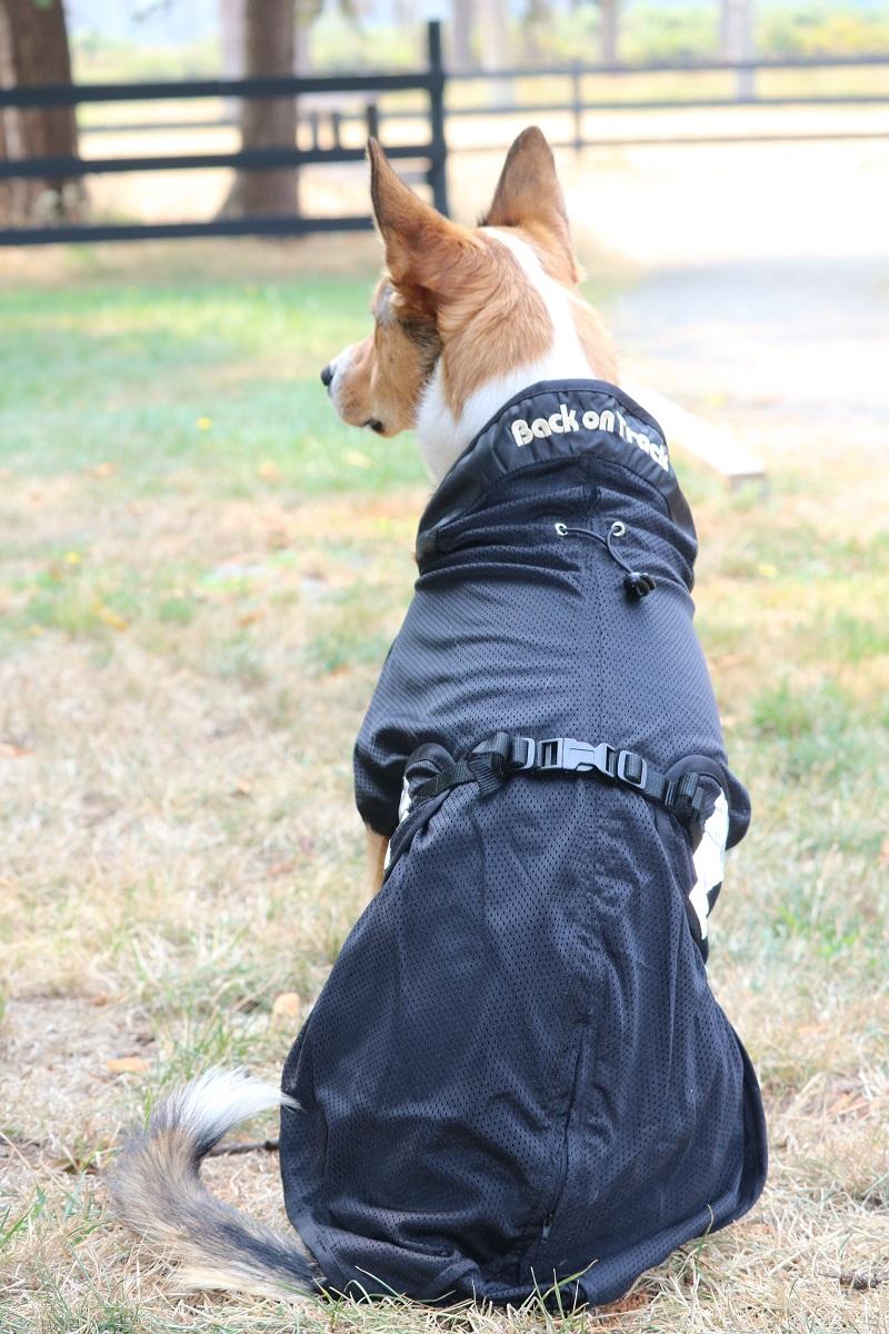 Back on Track Dog Mesh Coat DeHaviland